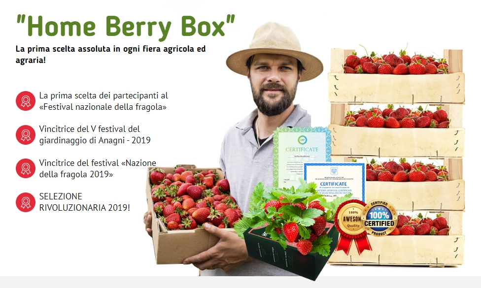 Home Berry Box